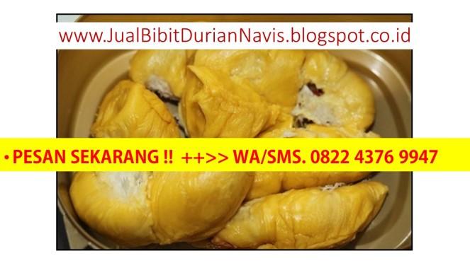 Bibit durian merah, bibit durian duri hitam, bibit durian pelangi, bibit durian super, bibit durian unggul, bibit durian montong, bibit durian.