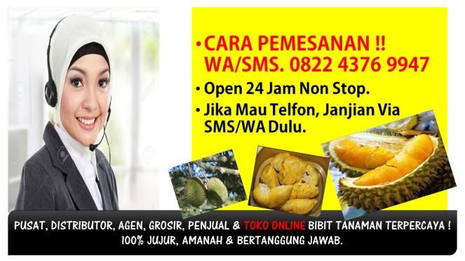 Bibit Durian Montong Magelang,Bibit Durian Montong Trubus,Bibit Durian Montong Banyumas,Bibit Durian Montong Jawa Timur,Bibit Durian Montong.