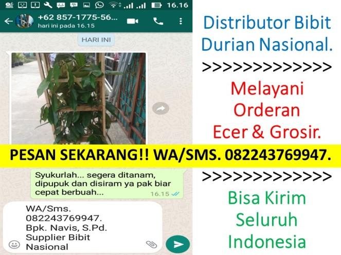 Bibit Durian Montong,Bibit Durian Montong Cepat Berbuah,Bibit Durian Montong 15rb Bibit,Bibit Durian Montong Di Majalengka,
